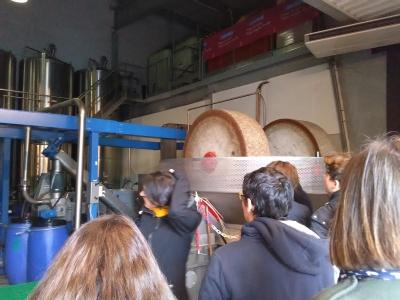 L'huile d'olive : tout savoir !